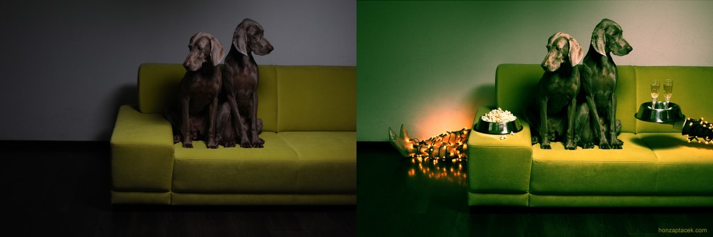 Weimaraner X-mas before and after